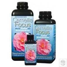 Camellia Focus Growth Technology