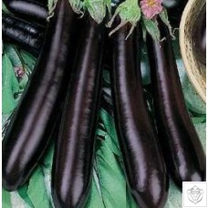 Aubergine 1 packet (660 seeds) N/A