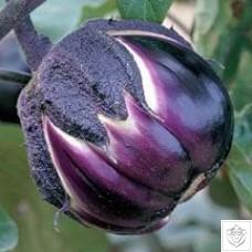Aubergine 1 packet (400 seeds)