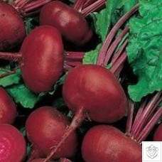 Beetroot 1 packet (600 seeds) N/A