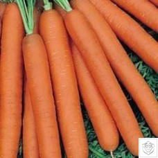 Carrot 1 packet (7200 seeds)