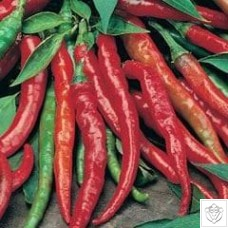 Chili Peppers 1 packet (50 seeds)