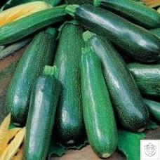 Zucchino Nano Verde di Milano Seeds N/A