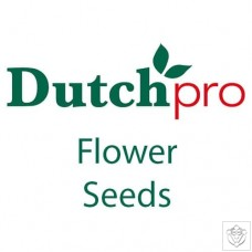 Flower Seeds Dutch Pro