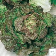 Lettuce 1 packet (6400 seeds) N/A