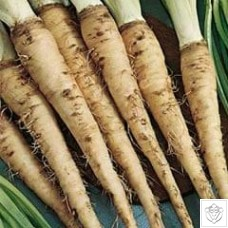 Salsify 1 packet (500 seeds) N/A