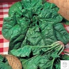 Spinach 1 packet (1200 seeds)