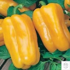 Pepper 1 packet (50 seeds)