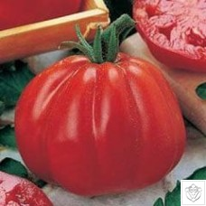 Tomato 1 packet (390 seeds)