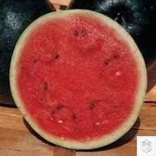 Melon 1 packet (12 seeds)